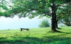 新緑とベンチ